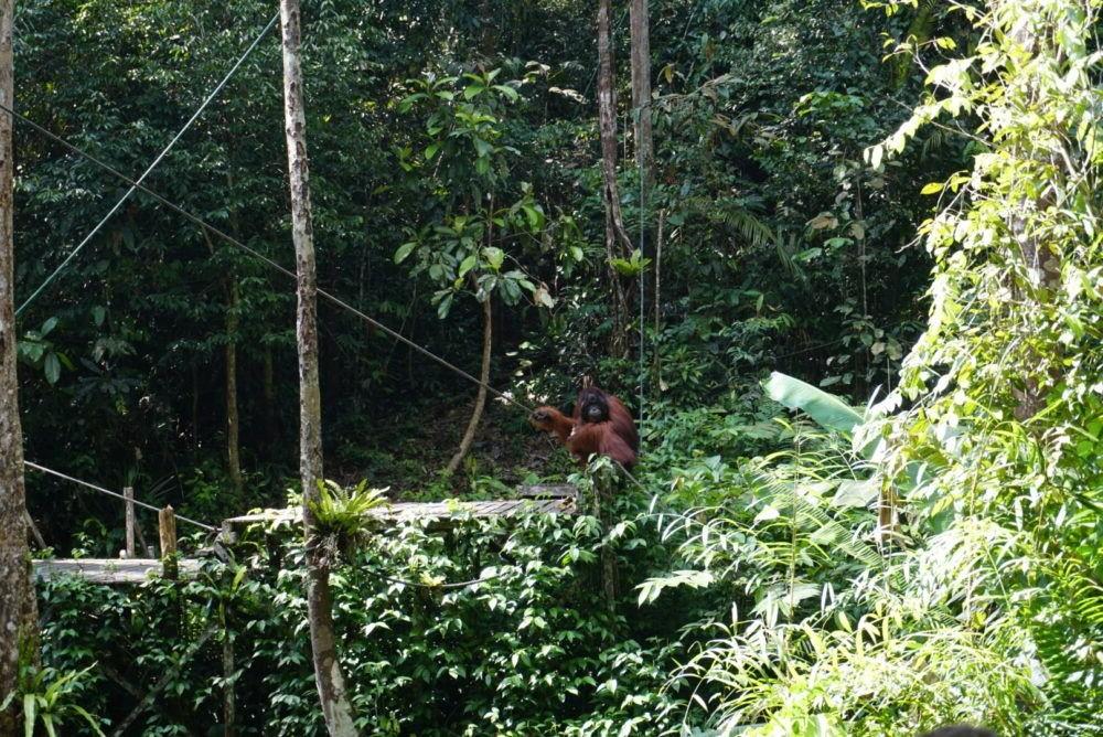 Semenggoh Nature Reserve
