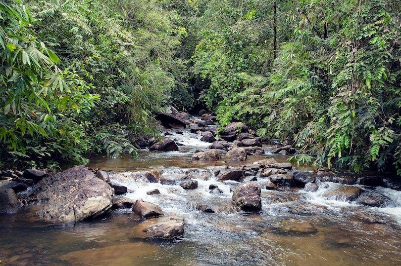 Sinharaja reserva florestal