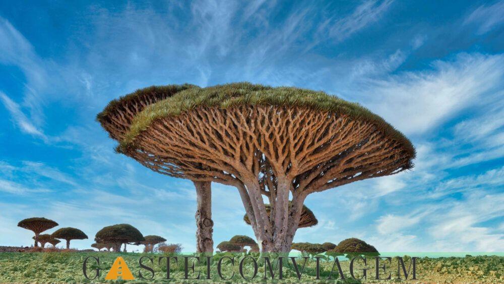 Socotra Dragon Trees