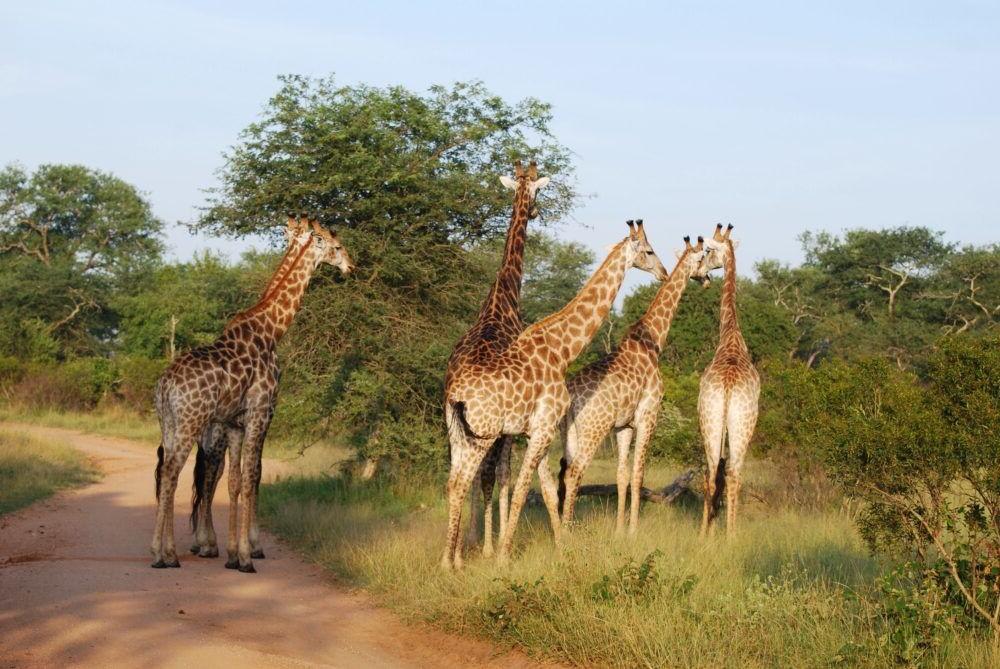 Touring Kruger National Park