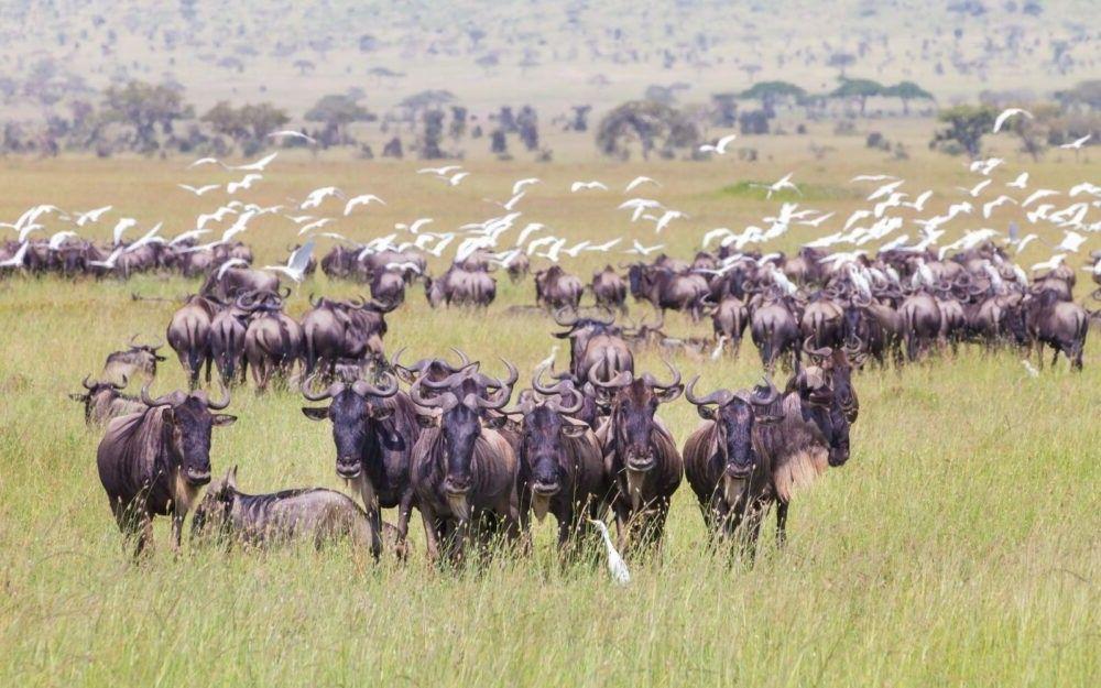 turismo no Parque Nacional do Serengeti