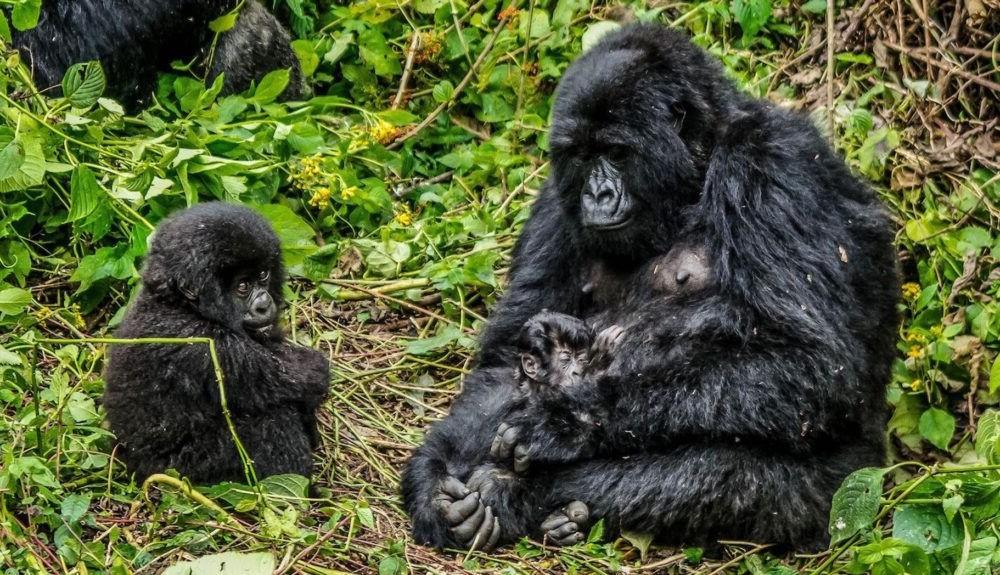 Turismo no Parque Nacional Virunga