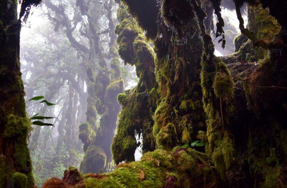 um lugar sagrado Floresta Mossy Cameron