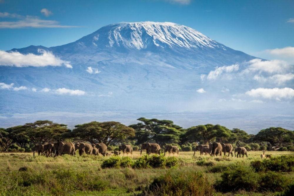 Ver Parque Nacional Kilimanjaro