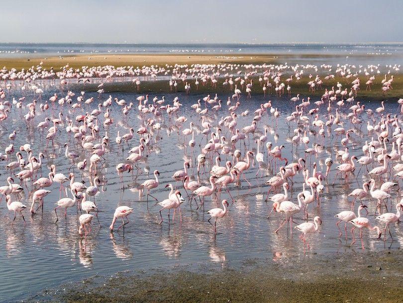 Walvis Bay Lagoon